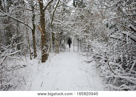 Active man walks alone at a footpath in a forest with snow all over
