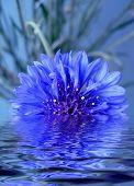 Blue Flower5