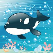 Baby Killer Whale. Funny cartoon and vector illustration. Isolated character