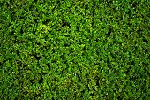 Background photo of green little plants in a bush.