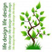 Life tree for best design.