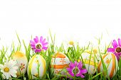 stock photo of easter decoration  - Row of Easter Eggs with Daisy on Fresh Green Grass - JPG