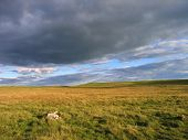 Lonely Moors