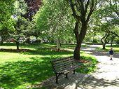 Spring In Boston Public Garden