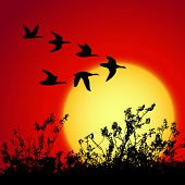 landscape in sunset with silhouette birds
