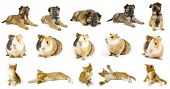 collection animals  the white backgrounds