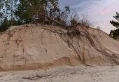 Fallen Tree On The Washed-up Sand Shore Dune Erosion Baltic Sea poster