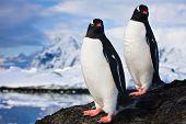 Pinguine träumen sitzend auf einem Felsen, Berge im Hintergrund