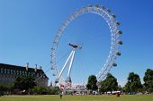 The London Eye seen from Jubilee Gardens with a clear blue sky