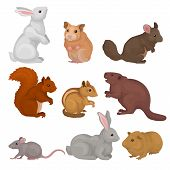 Cute Rodents Set, Small Wild And Domestic Animals Vector Illustration On A White Background poster