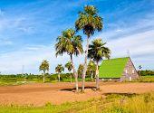 Casa para curar tabaco en la región cubana de Vuelta Abajo, un área de cultivo del tabaco famoso mundo