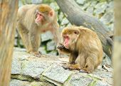 Two monkeys in wild nature