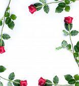 Frame of red roses on white background