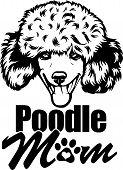 Animal Dog Poodle 7 Mom.eps poster