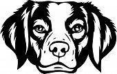 Animal Dog Rhodesian Ridgeback 6T6Ft.eps poster
