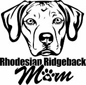 Animal Dog Rhodesian Ridgeback Labador 6T6Vg Mom.eps poster