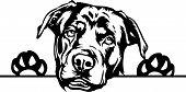 Animal Dog Rottweiler Peeking.eps poster