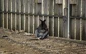 Kangaroo Sitting Resting, Australia Marsupial, Animal Mammal poster