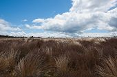 Windswept tussock plains.