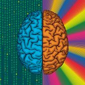 Right and left brain.