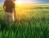 man in wheat field and sunlight