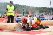 RAUBICHI, BELARUS - AUGUST 25: Japanese Akita Mitsugi performs precision bucking during World Loggin