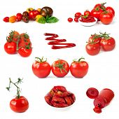 Collection of tomato images, isolated on white.  Includes vine, cherry, roma, plum, sundried and heirloom varieties, puree and ketchup.