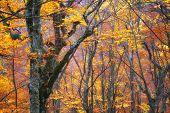 Outono textura de floresta. Composição da natureza.