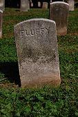 A Pets Headstone