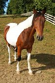 A Painted Horse