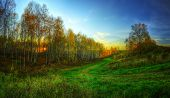 stock photo of novosibirsk  - The HDR panorama of the golden late autumn forest with blue sky and green road during sunset in Koltsovo  - JPG