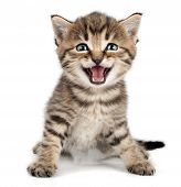 stock photo of tongue  - beautiful cute little one month old kitten meowing and smiling