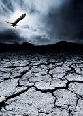 stock photo of drought  - A bird flies over a desolate landscape - JPG