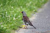 Bird standing on the pavement.