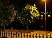 Evening scene with tree