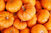 picture of gourds  - Small pumpkins - JPG