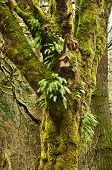 Mossy Tree in forest with birdhouse and ferns