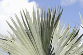 Fan Palm Leaves Outdoor Background