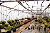Hanging Baskets And Nursery Plants In A Hothouse Tunnel