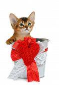 Valentine Theme Kitten Sitting In A Silver Bucket