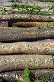 Heap Of Firewood Logs