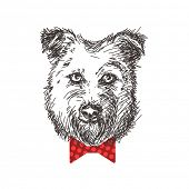 Sketch of dog portrait with bow tie, Hand drawn illustration.