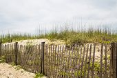 stock photo of sea oats  - An old wood fence among sand dunes and sea oats on the beach - JPG