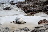 Seal on Beach