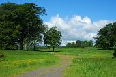 Trees And Meadows Near Alnwick Castle