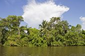 Beautiful tropical forest from the river