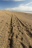 Track, Wheel Ruts On The Chesil Beach.