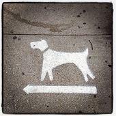 Dogs Turn Left in New York City