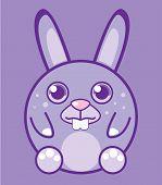 Round bunny