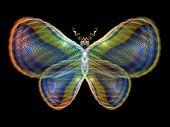 Glow Of Butterfly